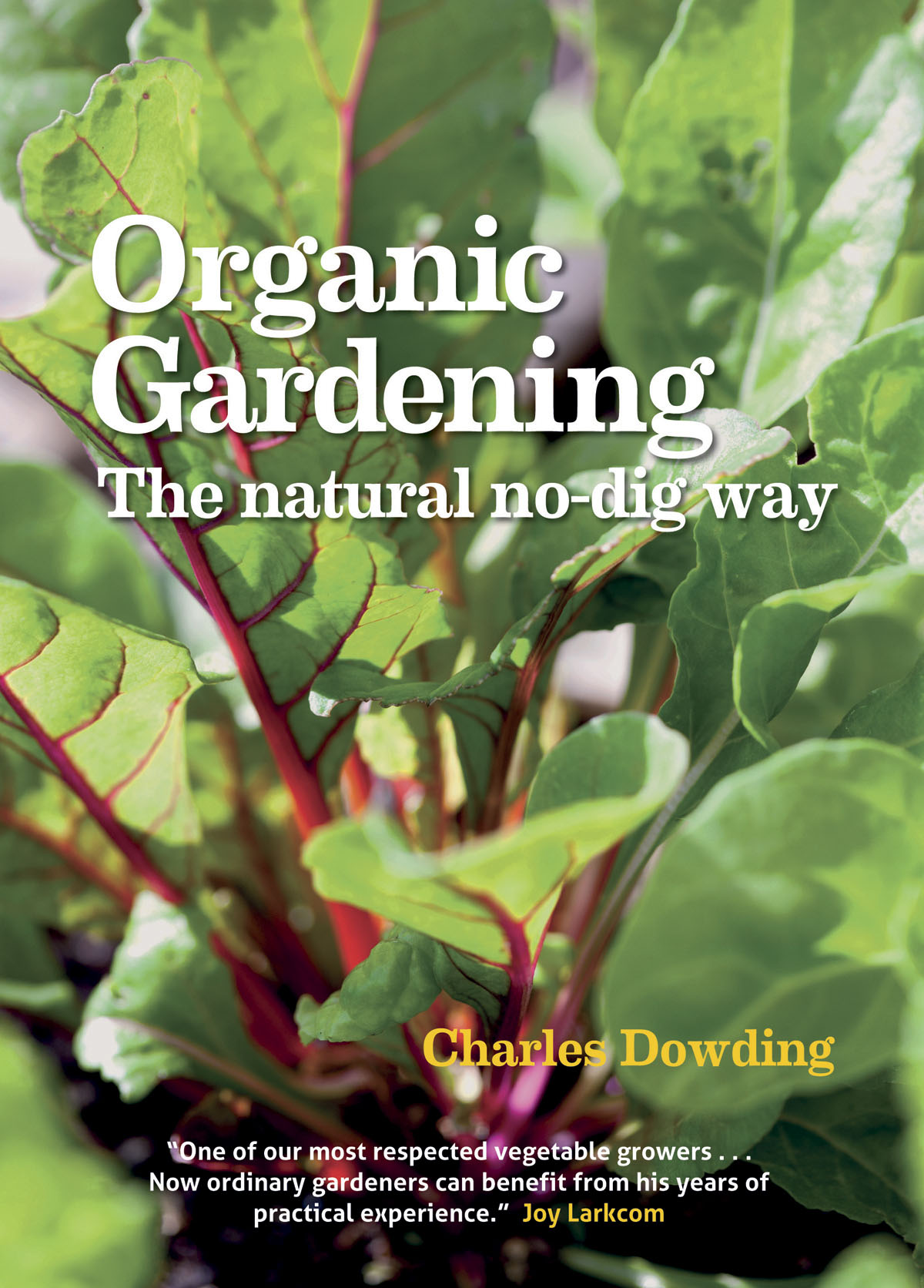how to grow winter vegetables no dig organic gardening