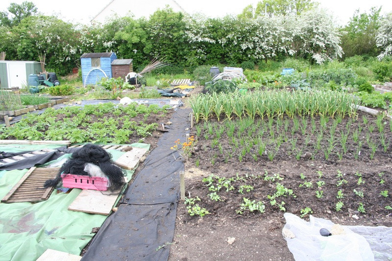 Steph's plantings and mulch before squash