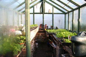 Many plants nearly ready to go into polytunnels in October