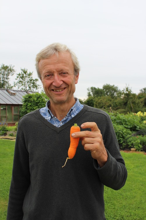 Carrot gtown in new bed of compost on pasture, its root managed to go into the soil