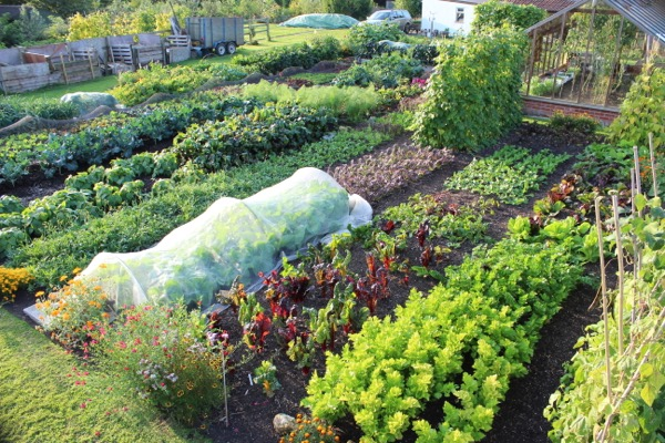 many beds have second plantings made in summer,