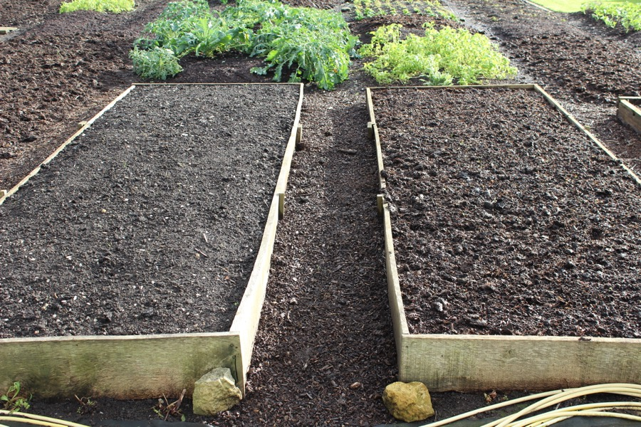 Homeacres experimental beds in January, dug bed on left and undug on right, same compost in each