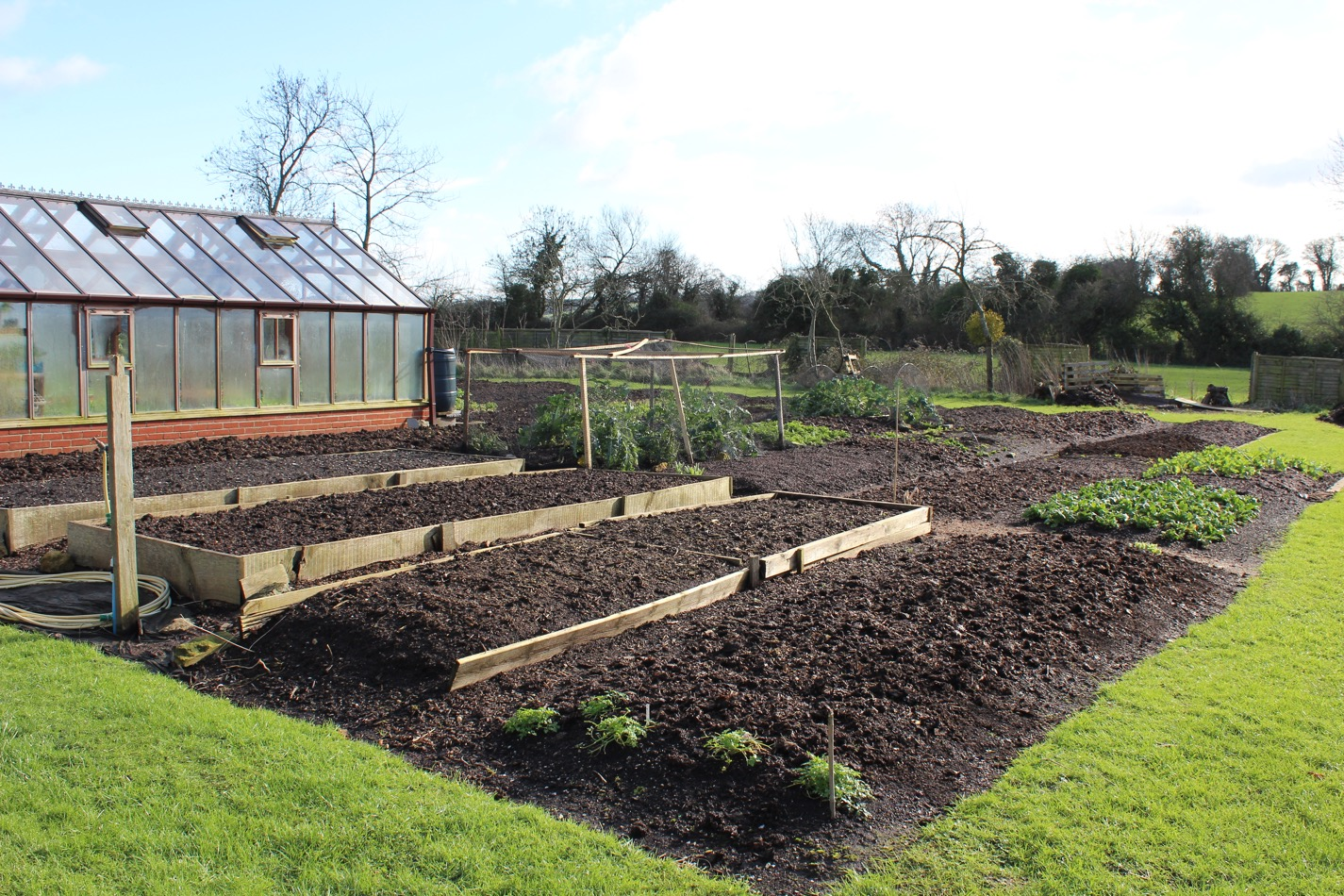No dig beds at Homeacres, winter-mulched with compost