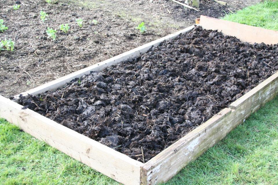 Mar162 1 Just Horse Manure So Far No Dig Organic Gardening