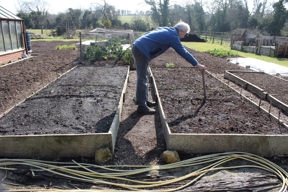 March 14th 2016, I am dibbing holes to plant spinach into the compost surface of the undug bed of an experiment at Homeacres, the dug bed is behind me