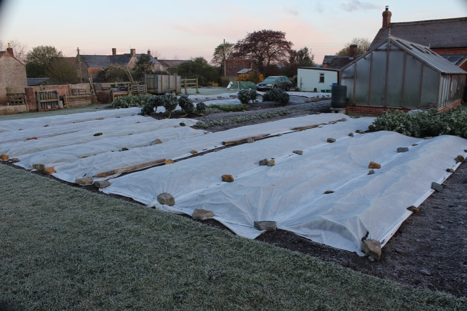 One of the many frosty mornings in late April, almost all new plantings are under fleece, see below