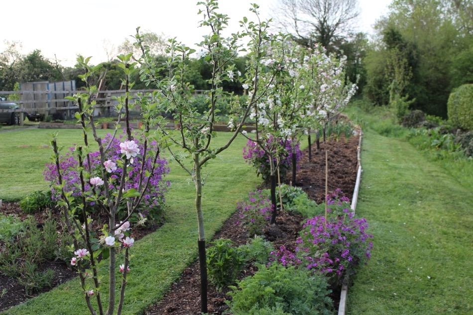may162 apple blossom