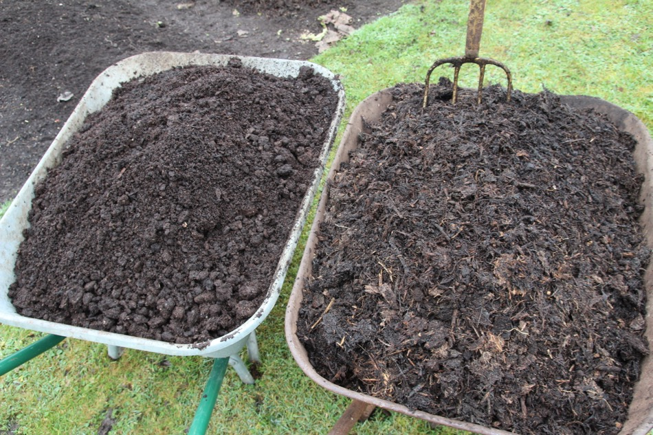 On left is mushroom compost, on right is six month homemade compost