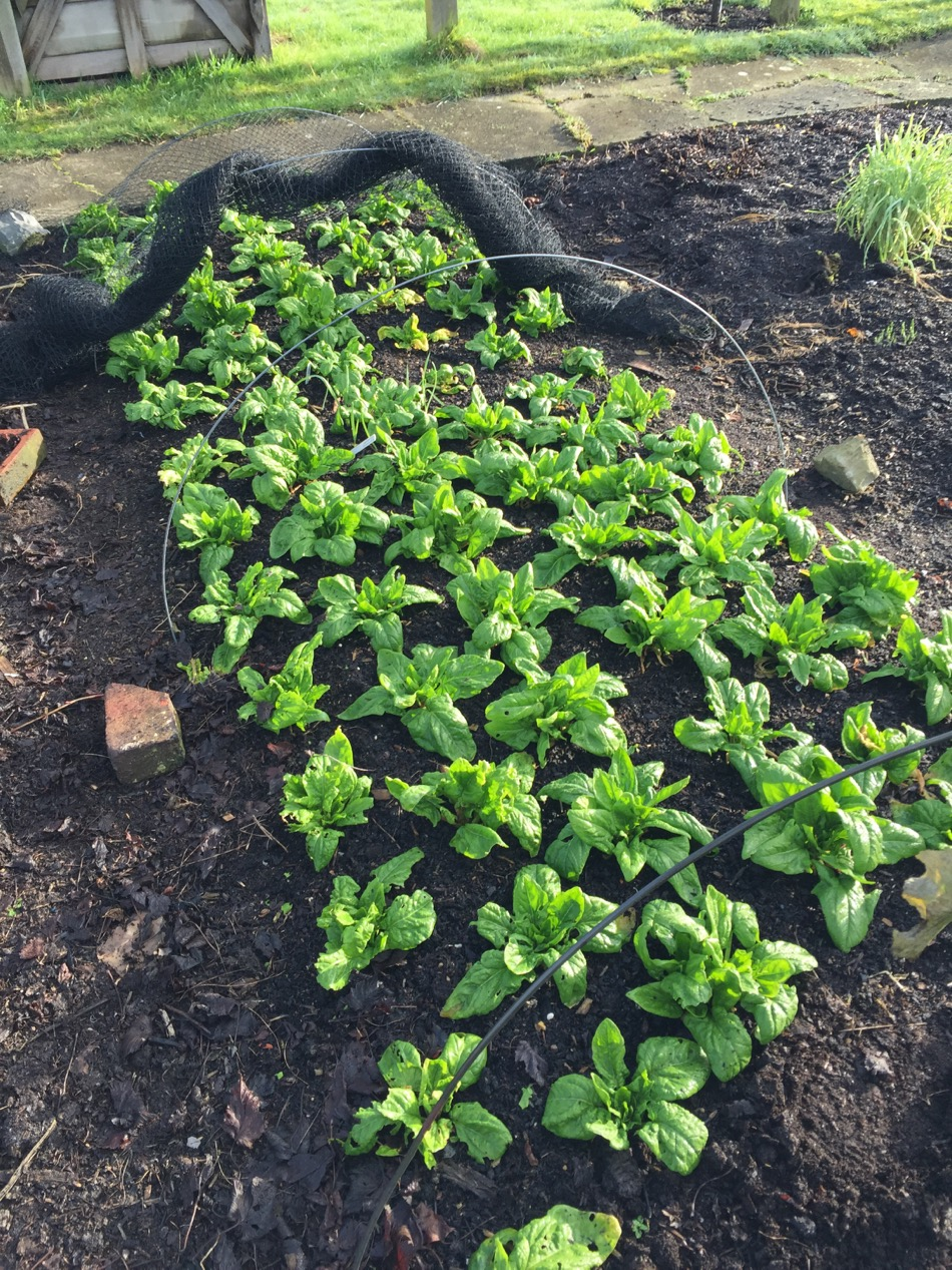 february update 2017 first sowings propagation u0026 composts no