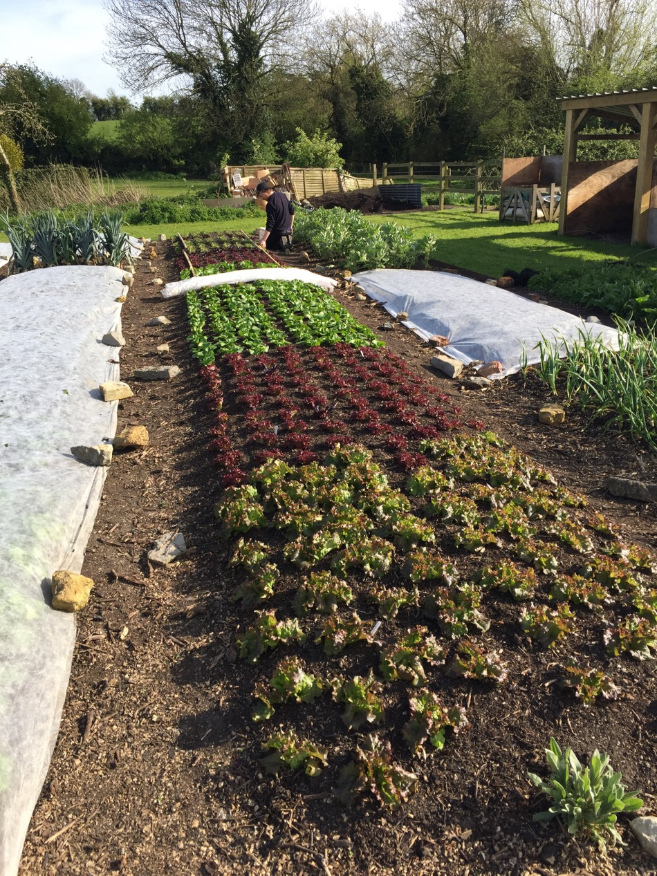 April 15th update: planting stage, propagation heat, dig/no dig ...