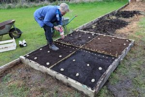 Sowing potatoes and onions spring 2018
