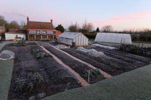 Homeacres 12th December 2017. mulched beds & frost