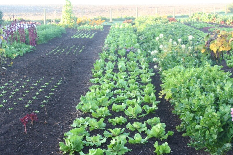 Veg in no dig clay soil