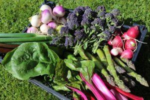Veg harvest mid May, broccoli etc