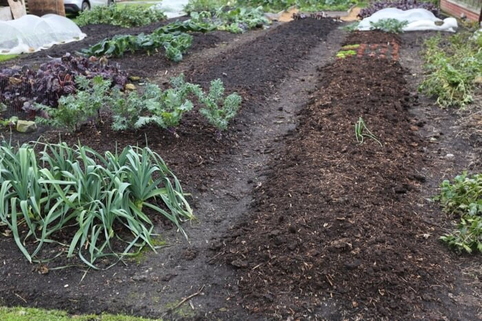 Newly spread compost, contrast of colours