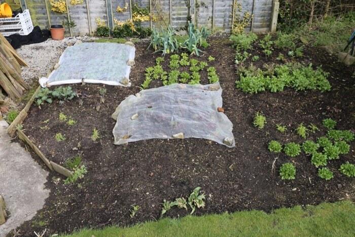 Small garden March '18 some veg
