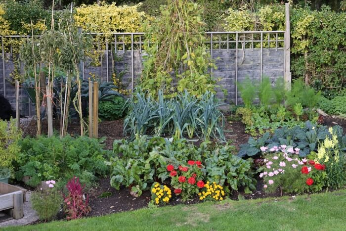 Small garden October '18, second plantings and flowers
