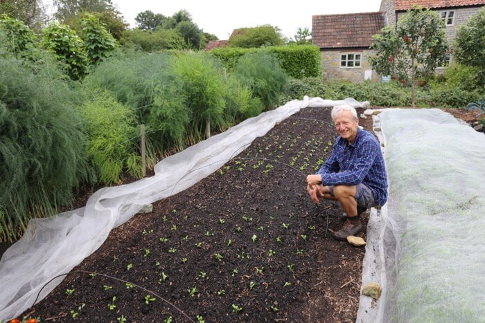 new salad plantings in August no dig