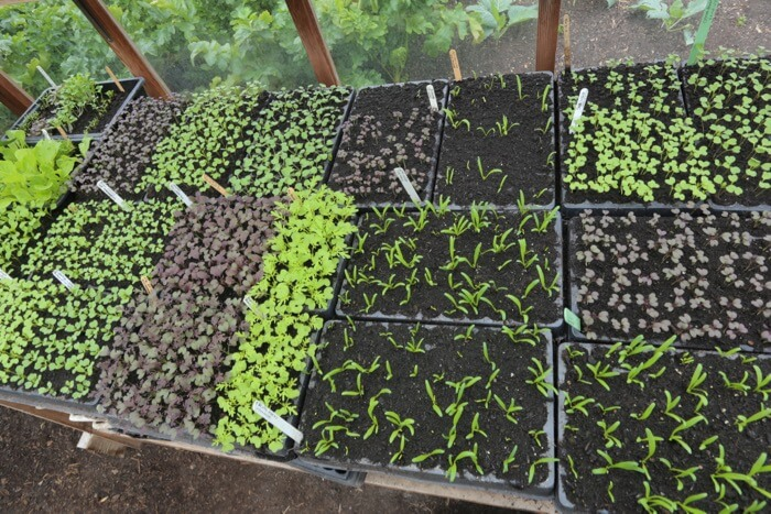 Module sowings August Charles Dowding