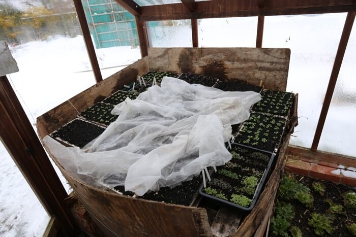 Hotbed sowings late winter
