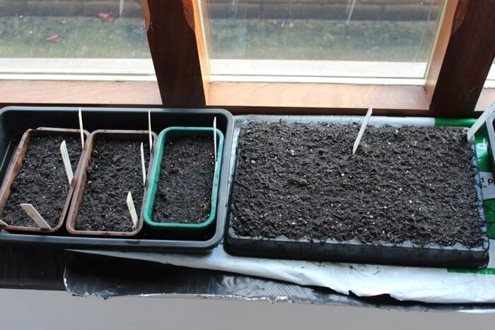Seeds germinating on a windowsill