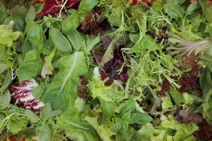 Salad leaves summer, different mix to winter