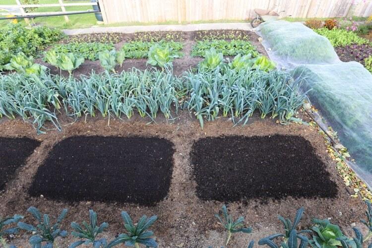 New compost after final harvest