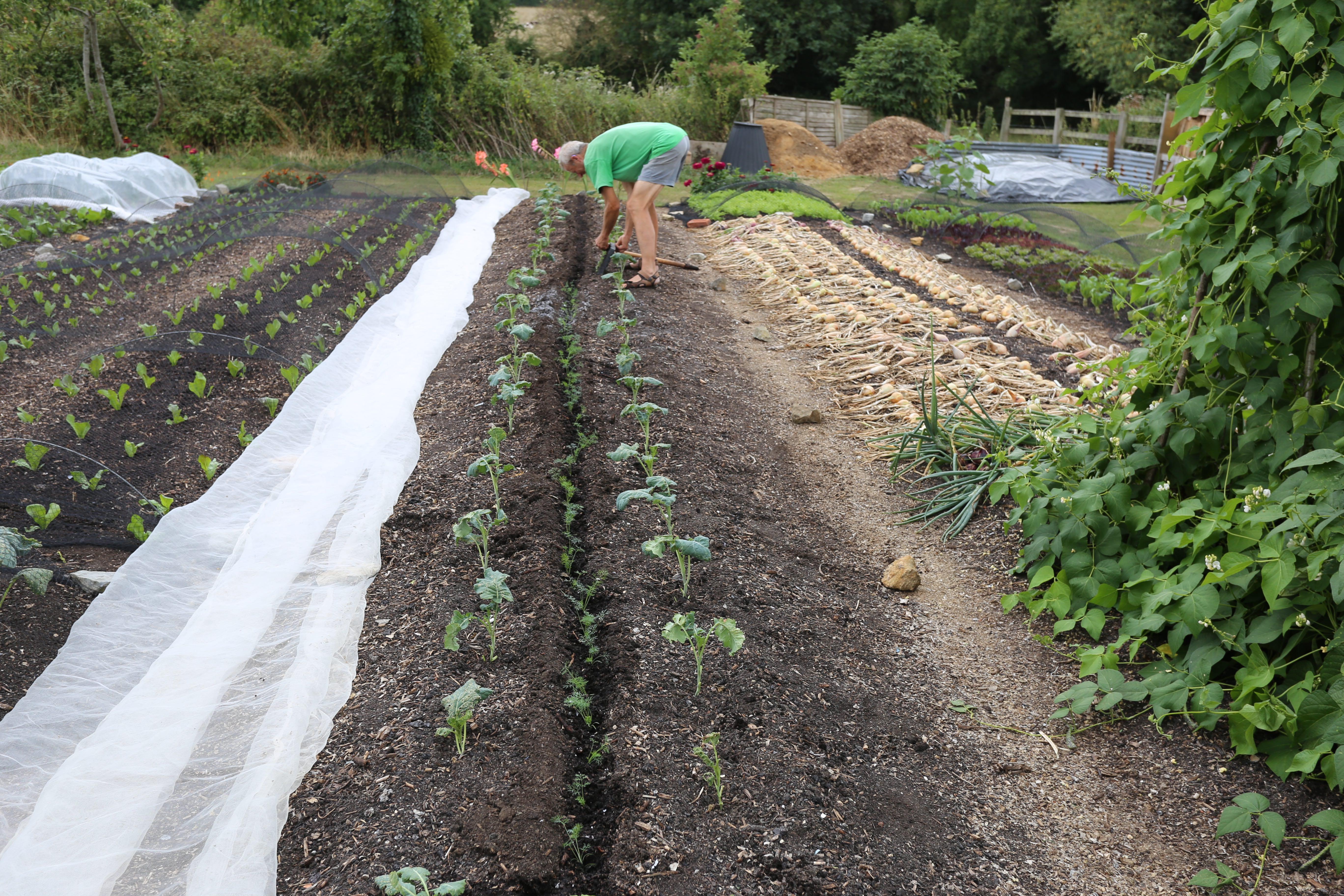 Summer planting no dig