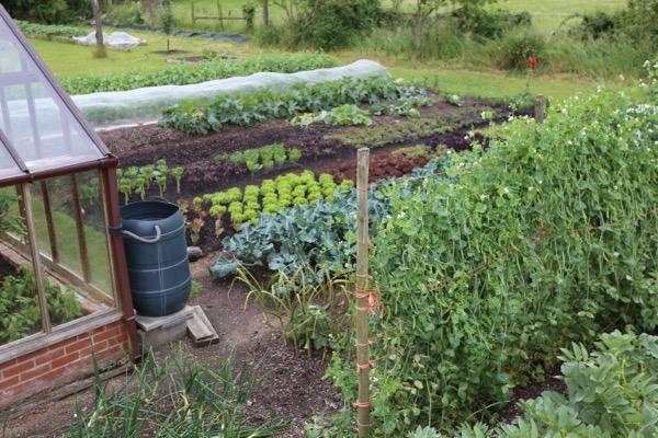 Charles' no dig garden in June