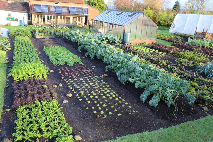 12. Weed free garden November: edges mown and cut every 3 to 8 weeks depending on weather. Nettles and tormentil on the boundary between membrane and a heap of compost