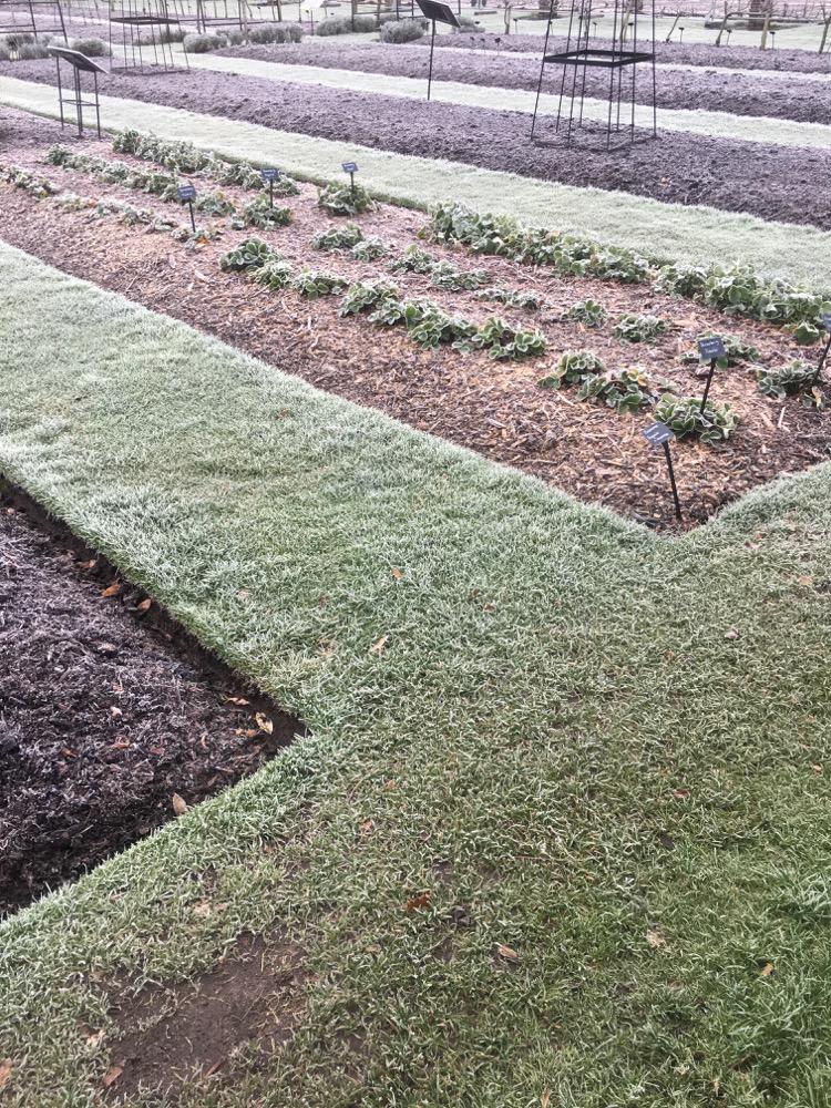 Kew Gardens no dig beds for vegetables