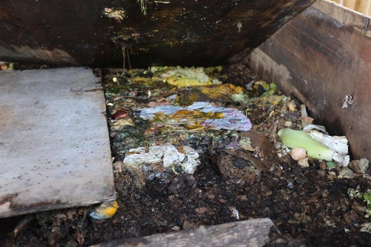 Rat runs in a compost heap