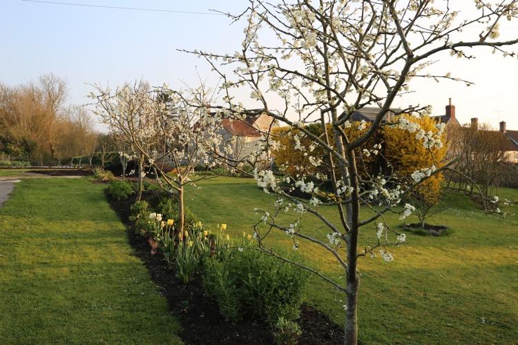 Plum blossom early spring Homeacres