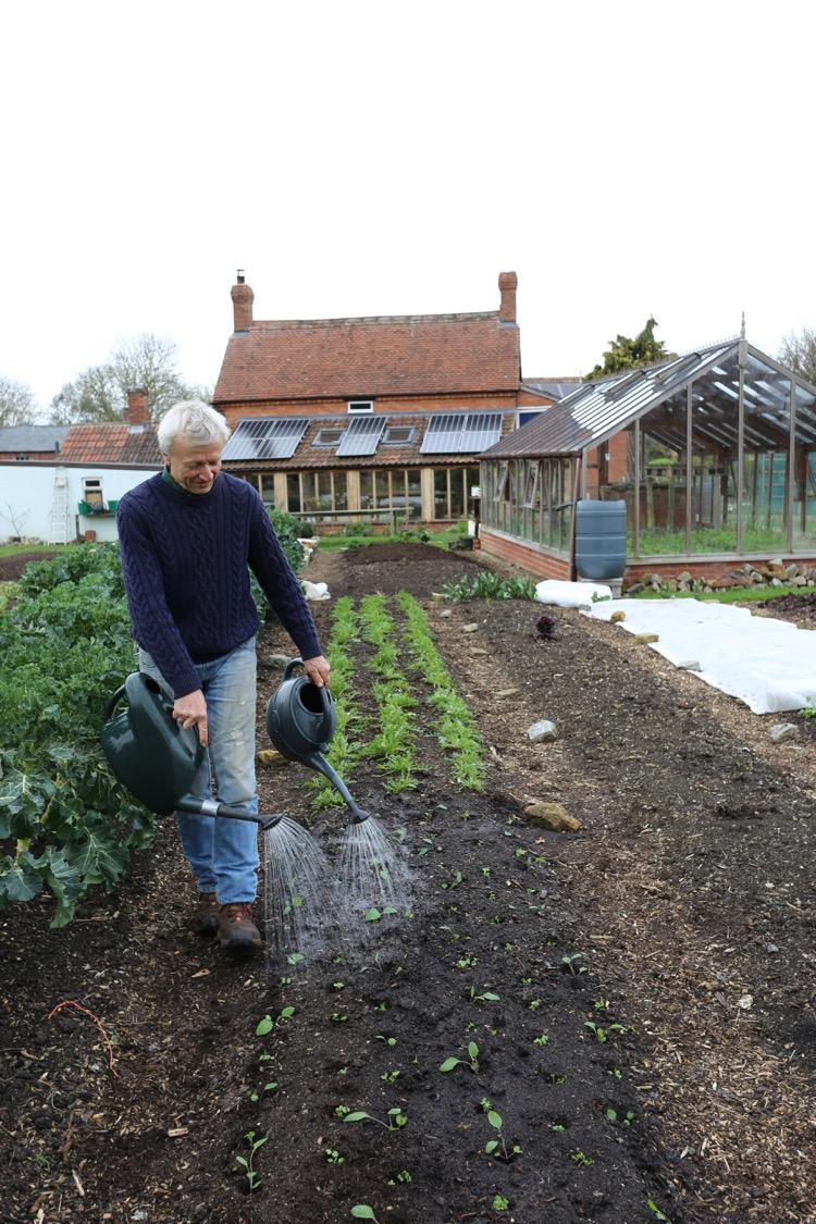 Watering seedlings to help establishment