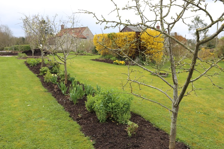 Fruit trees close to blossom time