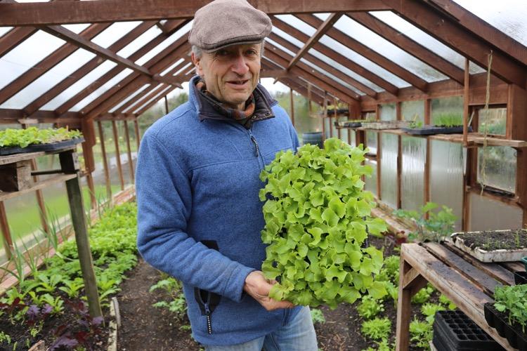 Lettuce plants in 3cm modules