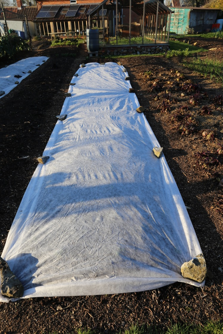 Fleece or row cover over new planting Charles D