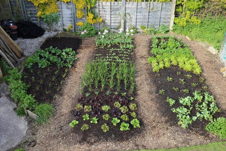 Small garden no dig, spring