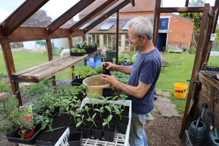 Charles potting cucumber seedlings
