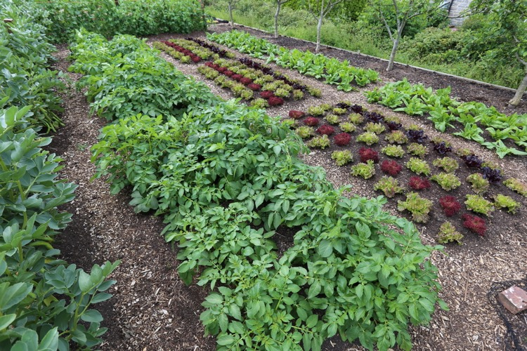 Potatoes, lettuce, spinach
