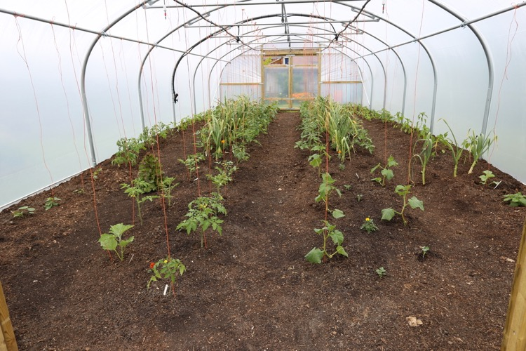 Planting finished in the new tunnel, no dig