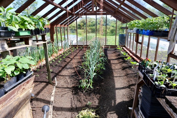 Greenhouse new plantings, more plants ready too
