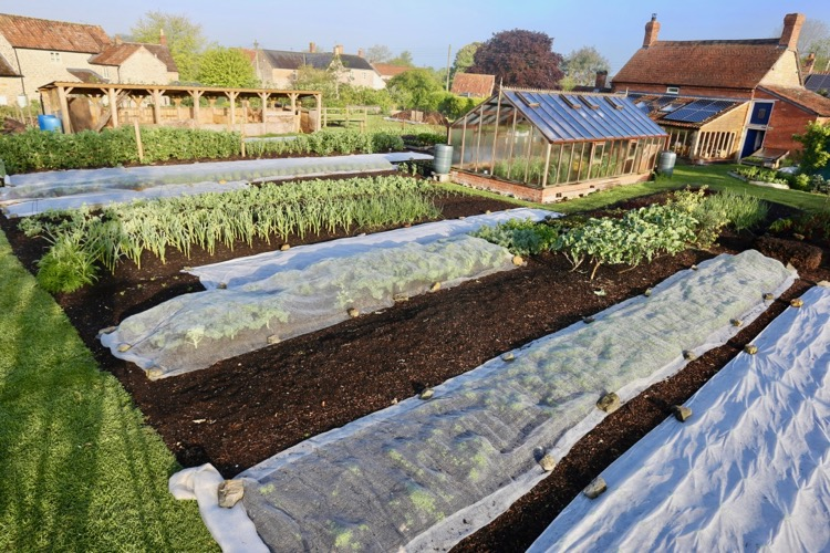No dig garden view & crop covers