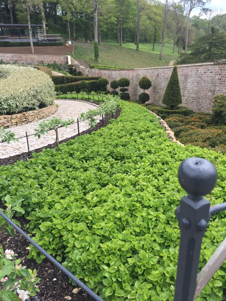 The Newt parabola garden, new apple trees