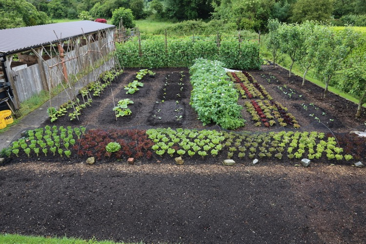 After broad beans cleared