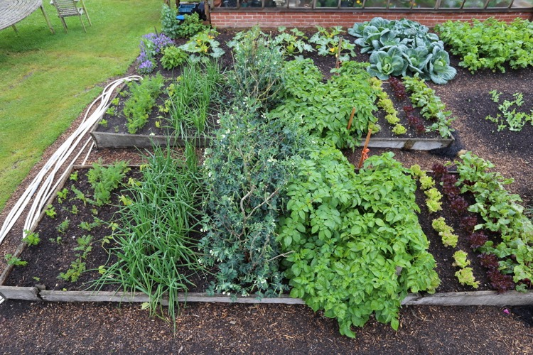 Trial beds dig and no dig, same plantings