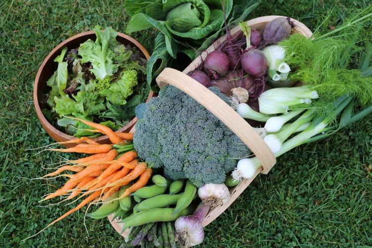 Harvests of early June